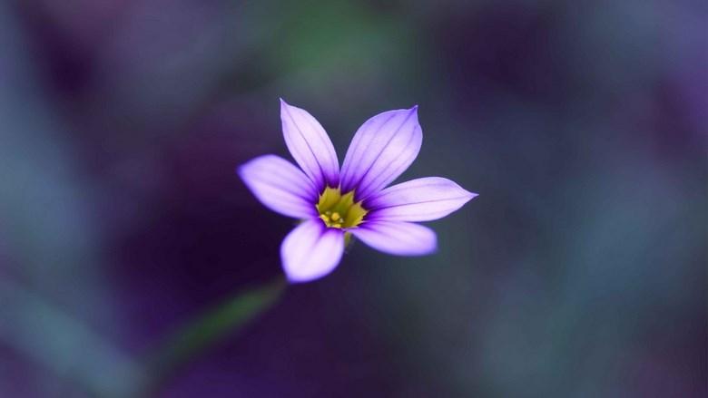 Priča o potoku i cvijetu (misao o odgovornosti)